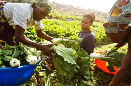 Jigawa government promises to support farmers' cooperatives