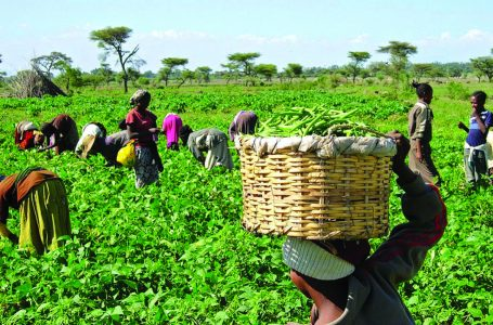 Poor Post-Harvest Activities Cause Losses, Hamper Quality Farm Produce —Experts