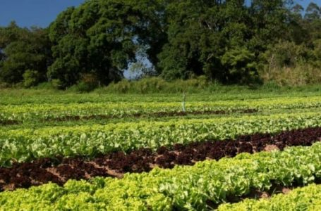 Green agriculture can conserve biodiversity and ensure food security – FAO