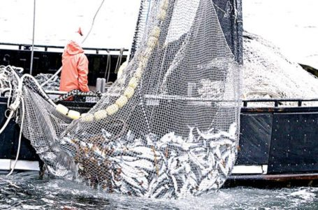 Nigeria loses billions to illegal fishing – Ship Owners