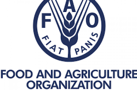 """Trade, critical to bridging food security gaps"" – FAO"