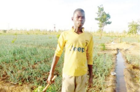 Irrigation farming threatened over ban on fuel supply to borders