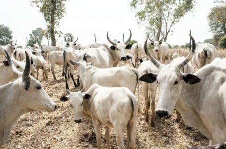NLTP: FG to upgrade grazing reserves in seven states