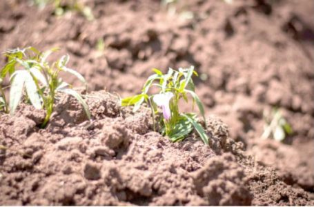 World Soil Day: Soil degradation heightens Nigeria's food insecurity