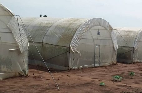 Greenhouse farming getting rooted in Lagos, Ogun
