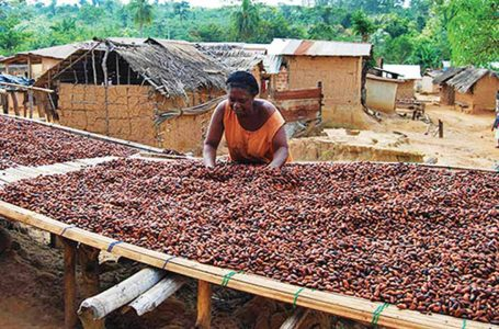 Specialists, association suggest ways to make cocoa highest forex earner in Nigeria