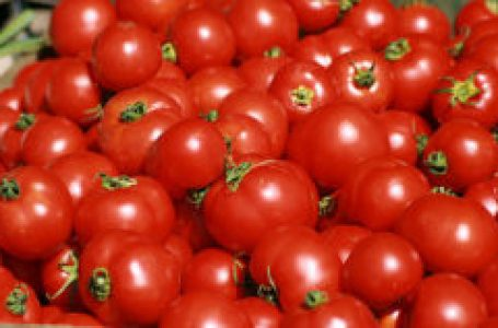 'Poor varieties of seeds affecting tomato production'