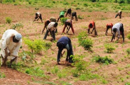 Agriculture commissioners call for ban on use of paraquat in Nigeria