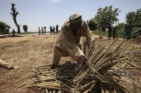 Nigeria doing poorly in agric research — Senate President
