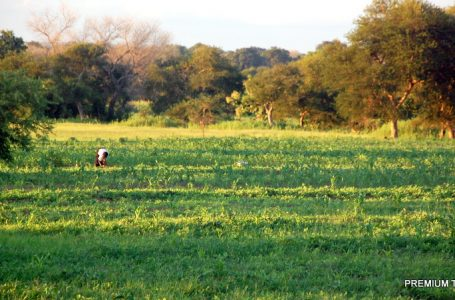 Coronavirus: West African farmers count losses, fear for worse – Report