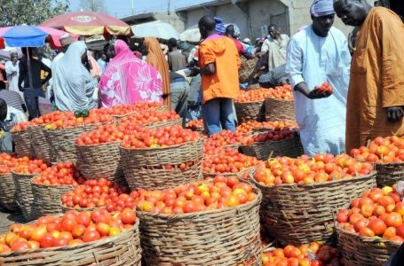 Traders report tomato shortage as pest reappears in Kano